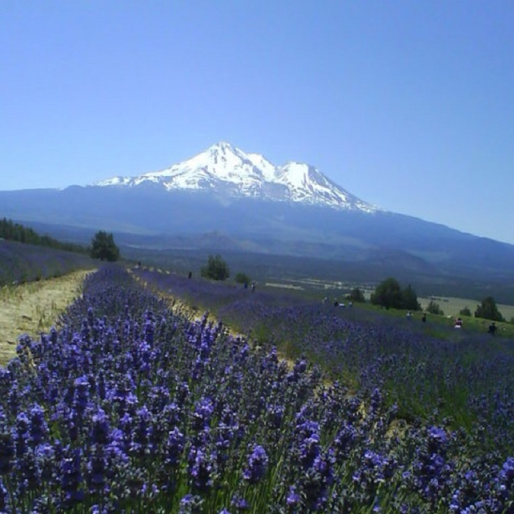 Famous Places In North California: Top 10 Places In California For Nature Lovers