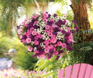 Top 10 Plants for Stunning Hanging Baskets