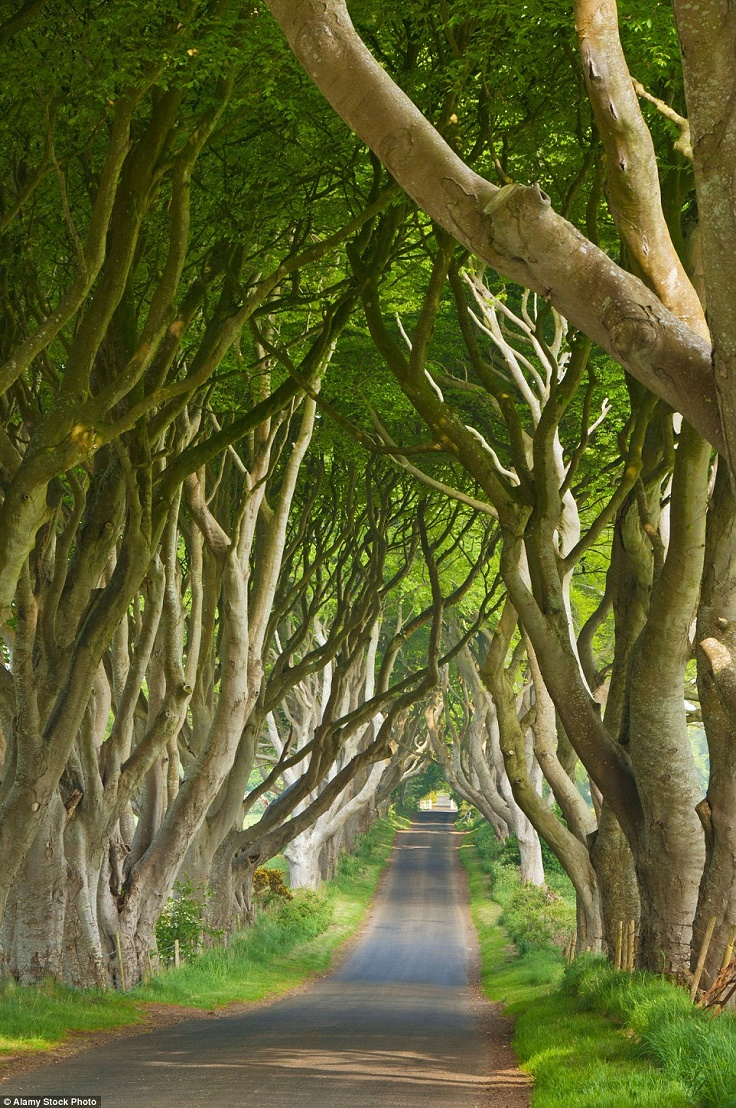 The-Dark-Hedges-Northern-Ireland