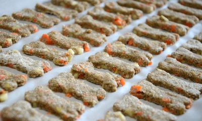 Apple Carrot Dog Treats