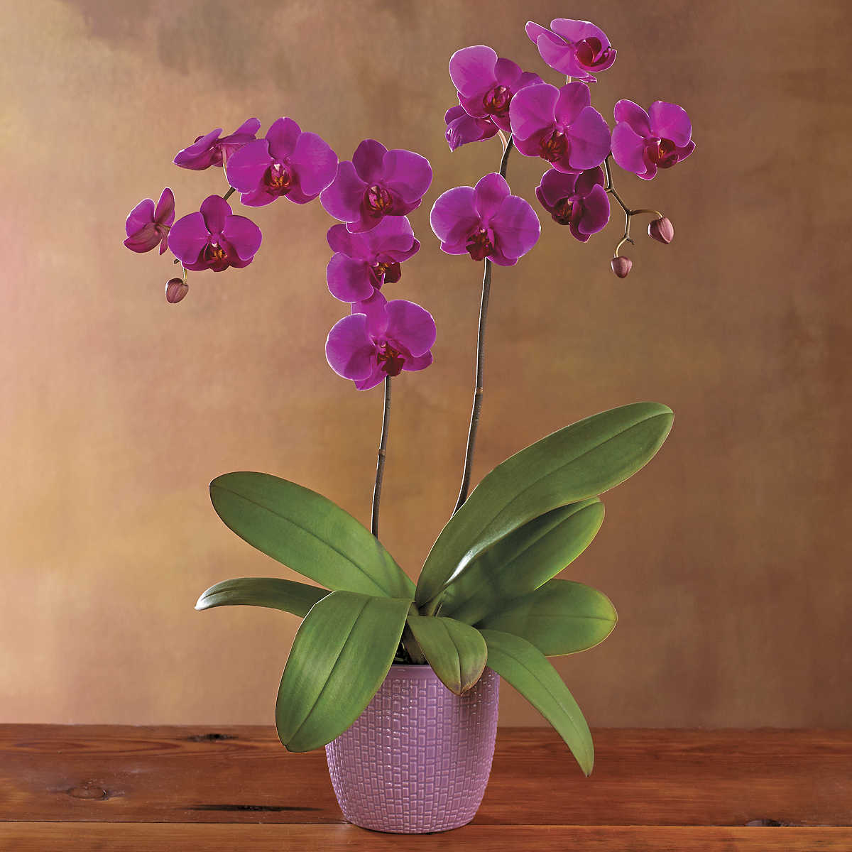 Growing Orchids For Beginners further 106538347409725535 further Can You Identify 12 Types Of Flowers likewise Cactus House Plants additionally Where Do I Cut My Dendrobium After It. on orchid care after flowering