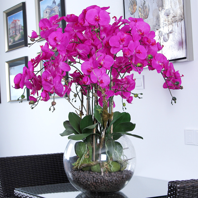 Top 10 tips on how to care for phalaenopsis orchids - How to care for potted orchids ...