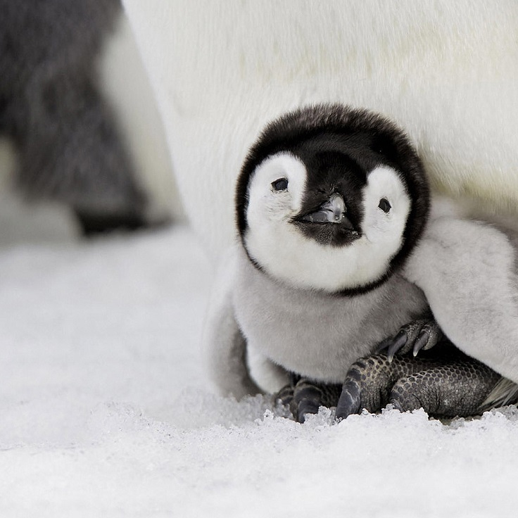 Top 10 Cute Photos of Baby Animals That Will Melt Your Heart
