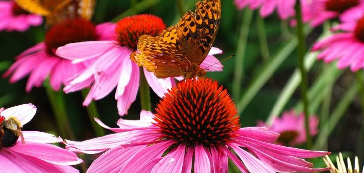 Top 10 Gorgeous Flowers That Attract Butterflies