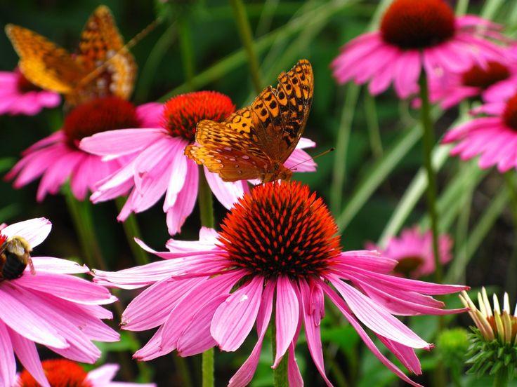 Butterfly-Purple-Cone