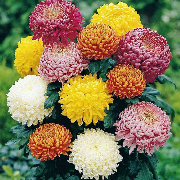 Top 28 Best Flowers To Plant In Summer 25 Types Of