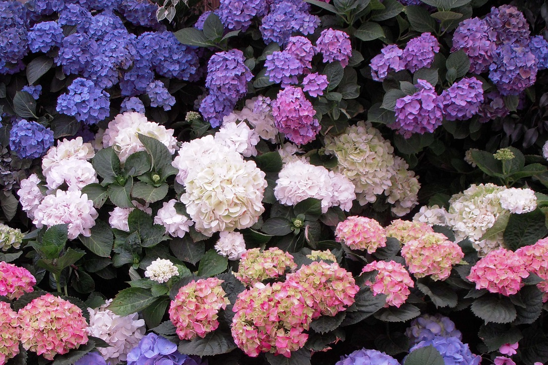 Top 10 Pretty Flowers To Plant This Summer Top Inspired