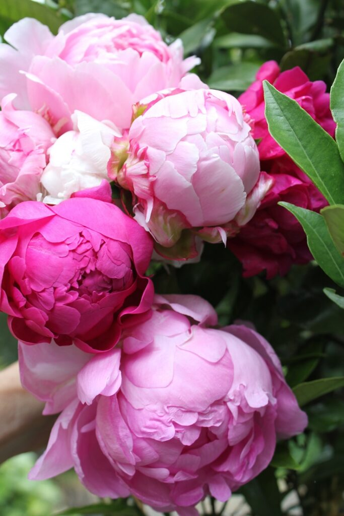 Top 10 Pretty Flowers to Plant this Summer - Top Inspired