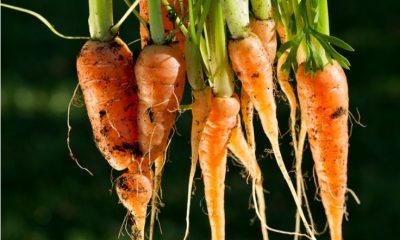 Fresh Organic Baby Carrots