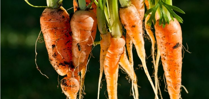 TOP 10 Fast Growing Vegetables You Can Harvest in No Time