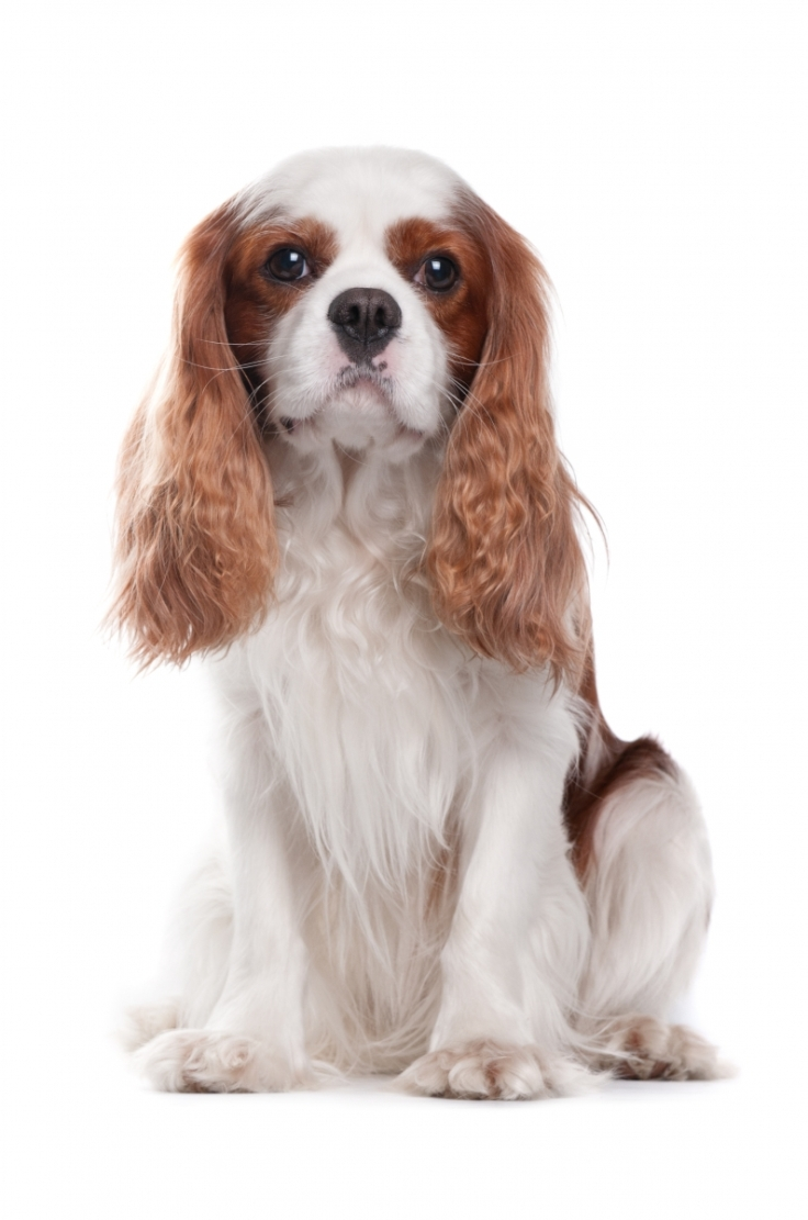 Low Maintenance Dog Breeds For Families