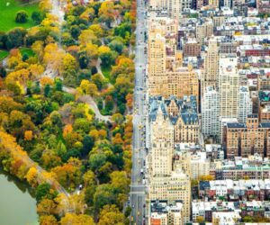 Top 10 Best Public Parks to See While in NYC