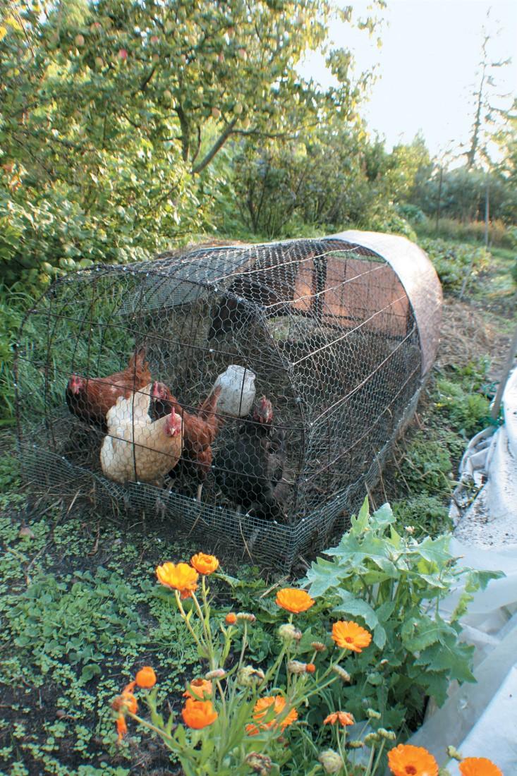Chicken-Power