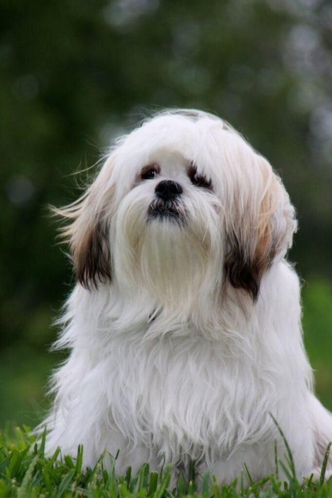 Top 10 Low Maintenance Dog Breeds Perfect For Busy Owners