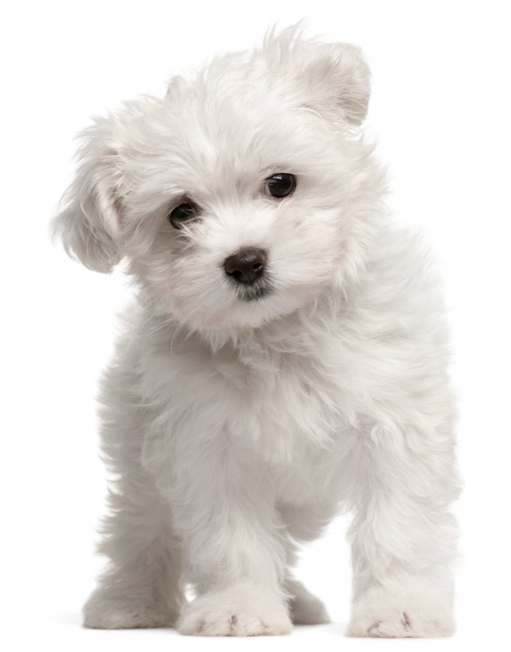 Top 10 Low Maintenance Dog Breeds Perfect For Busy Owners Top Inspired