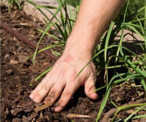 Top 10 Ways to Improve Your Garden Soil Naturally Without A Compost Pile