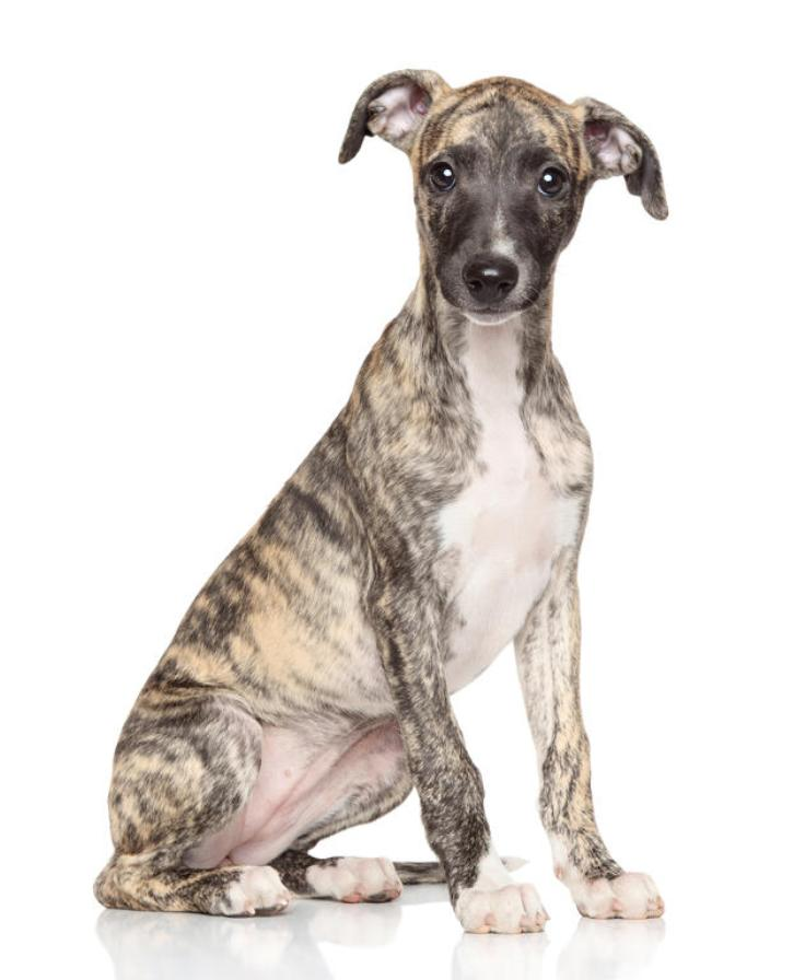 Top 10 Low-Maintenance Dog Breeds Perfect for Busy Owners