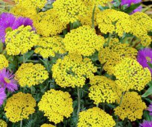 Top 10 Beautiful Drought-Tolerant Plants