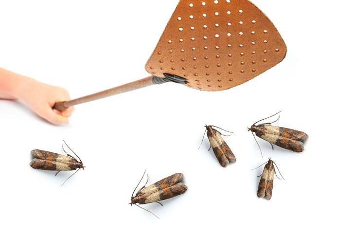 MothsWeb