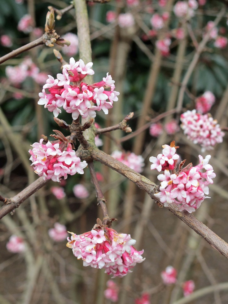 Top 10 Pretty Flowers and Shrubs for Winter