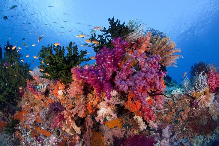 raja-reefs