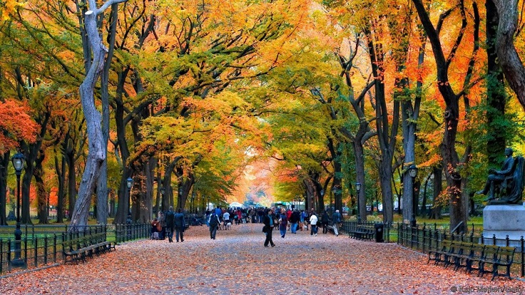 Fall-Leaves-in-Central-Park