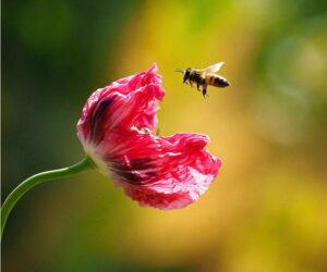 Top 10 Plants for Your Garden to Help Save the Bees