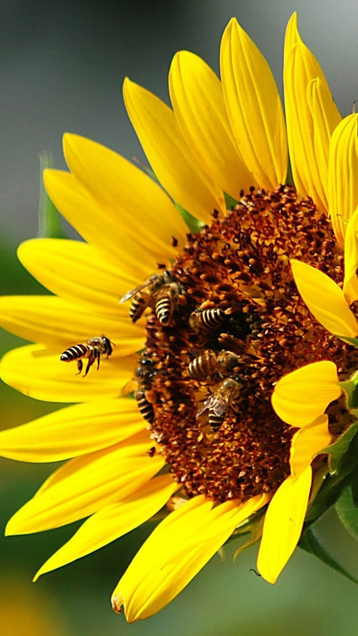 Top 10 Plants For Your Garden To Help Save The Bees Top