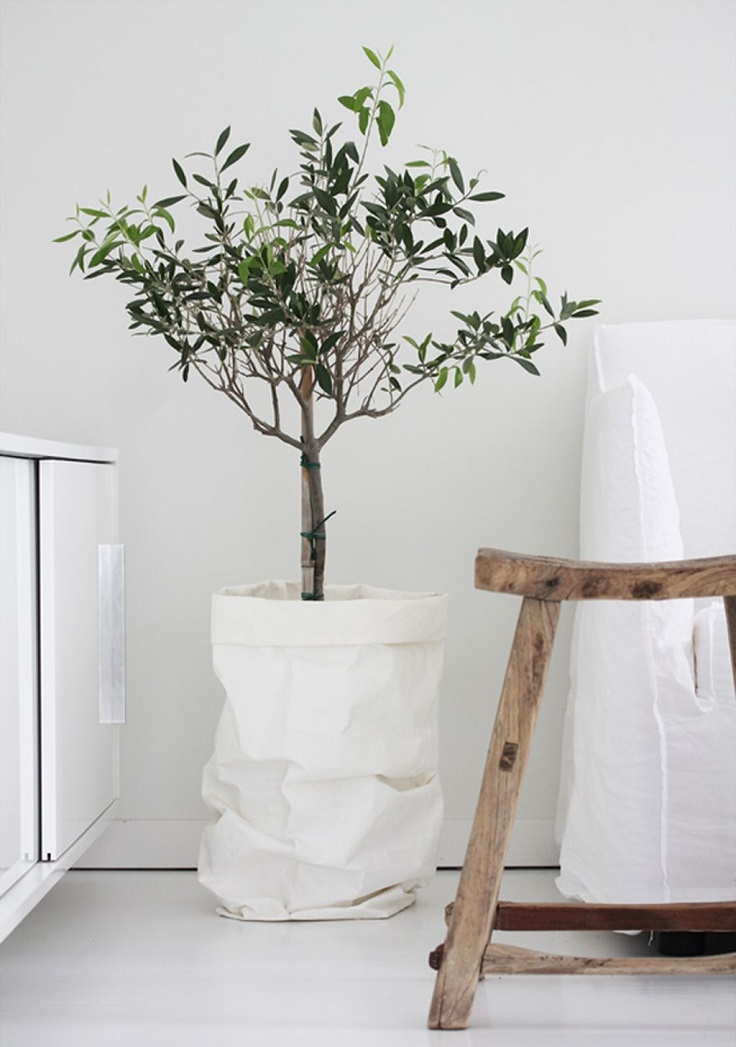 Top 10 Houseplants That Will Improve Any Room's Interior
