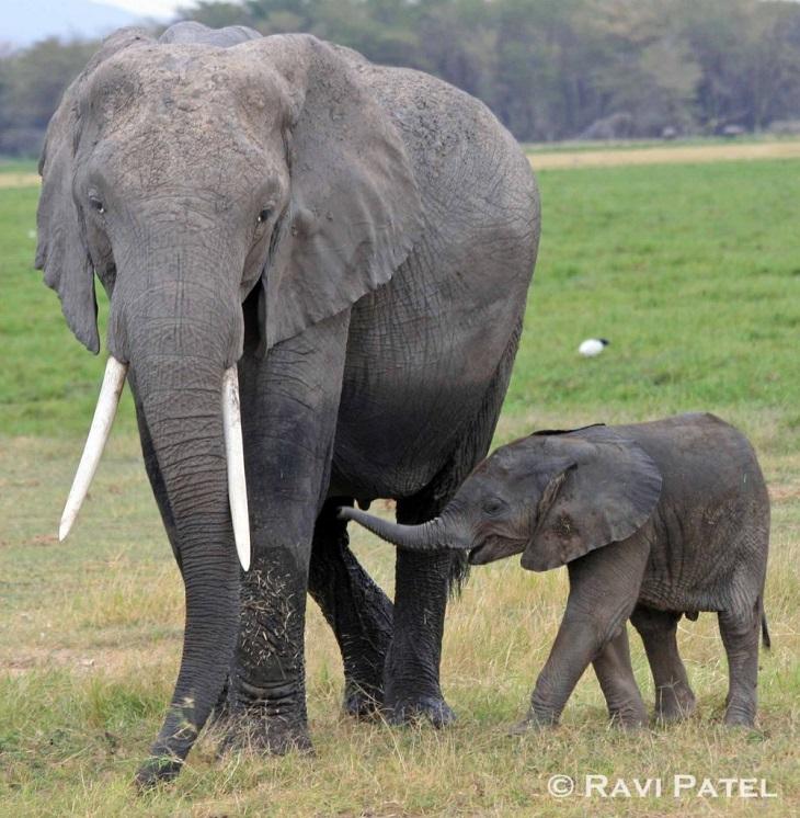 elephant-mother-child-1
