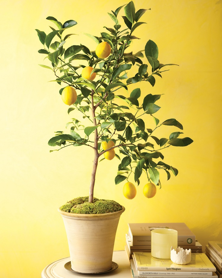 Top 10 Healthy and Healing Plants You Can Grow in Your Home