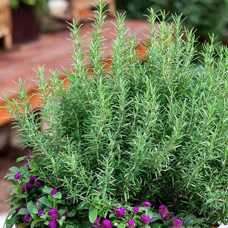 Top 10 Houseplants with Medicinal Properties