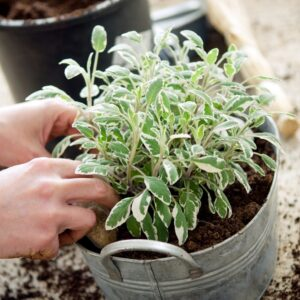 If you don't have the space to grow plants outdoors, there is always the possibility to grow them in your home. It is best to choose plants that are not only tasty to consume but also healthy and healing. There are so many medicinal vegetables, fruits and herbs to choose from.