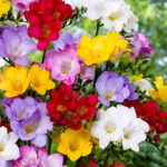 You must be wondering which are the flowers with most potent fragrance out there? Well, there are so many that it is hard to choose the best. Everyone has their preferences, but to us these 10 are the most popular and pleasant smelling. Check them out and feel free to add your favorites in the comments section.