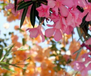 Top 10 Most Poisonous Garden Plants That Could Kill You