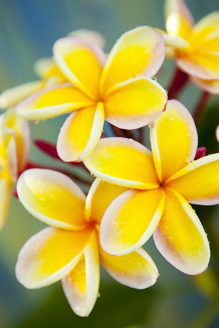 Top 10 of The Most Fragrant Flowers in The World