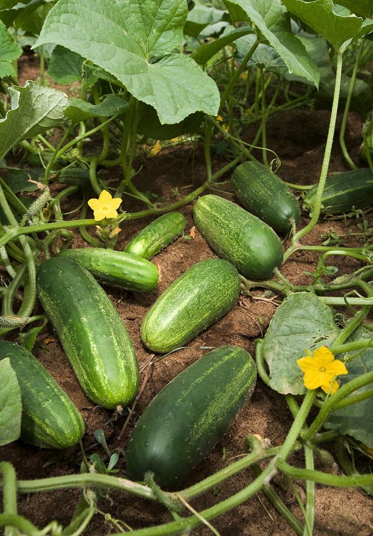 Successful-Planting