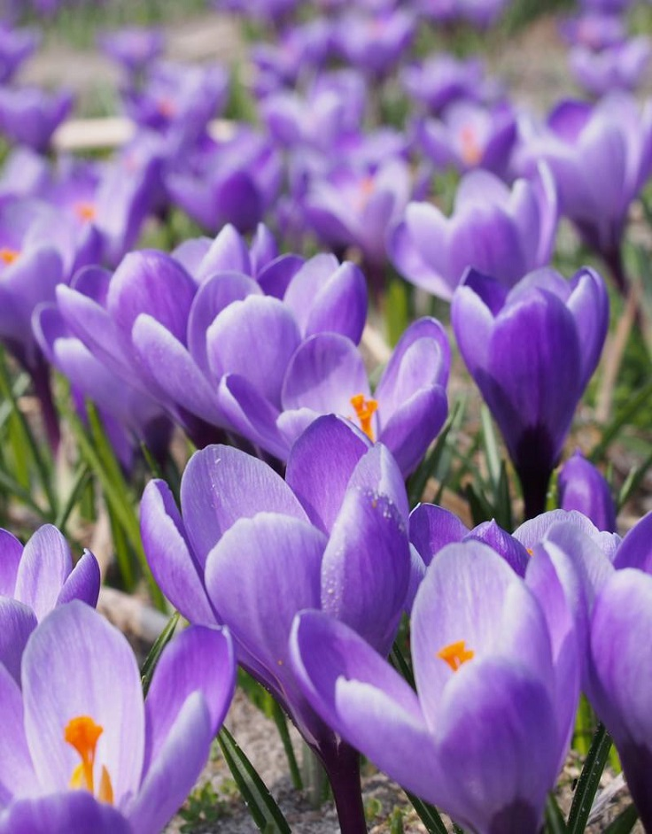 Top 10 Beautiful Spring Flowers For Your Garden