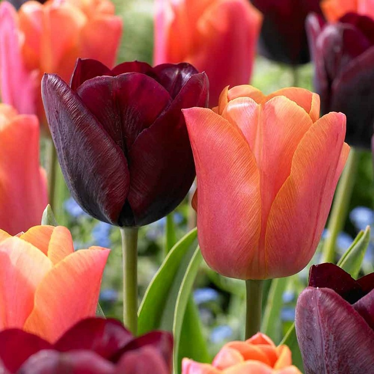 Top 10 beautiful spring flowers for your garden top inspired top 10 beautiful spring flowers for your garden mightylinksfo