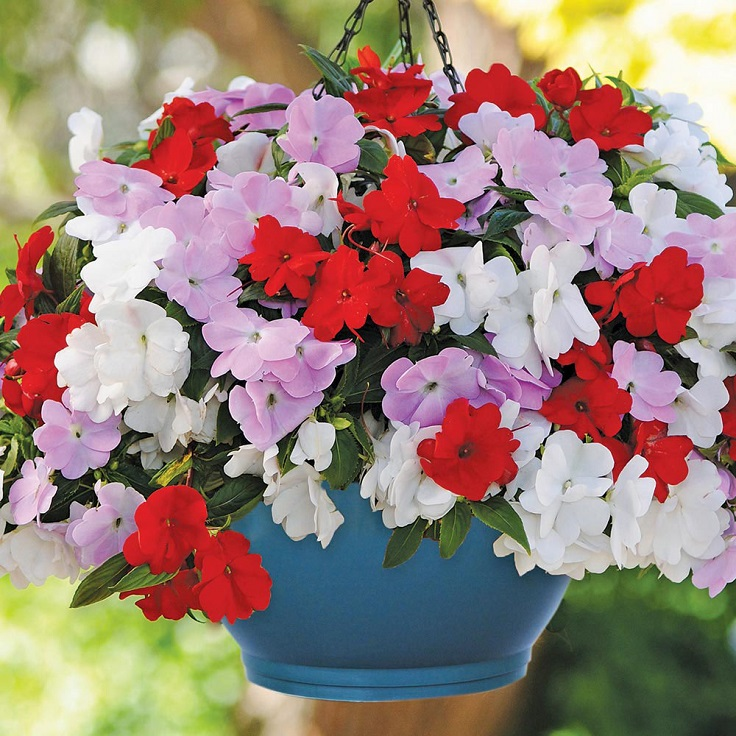 Top 10 Wonderful Plants for Small Containers