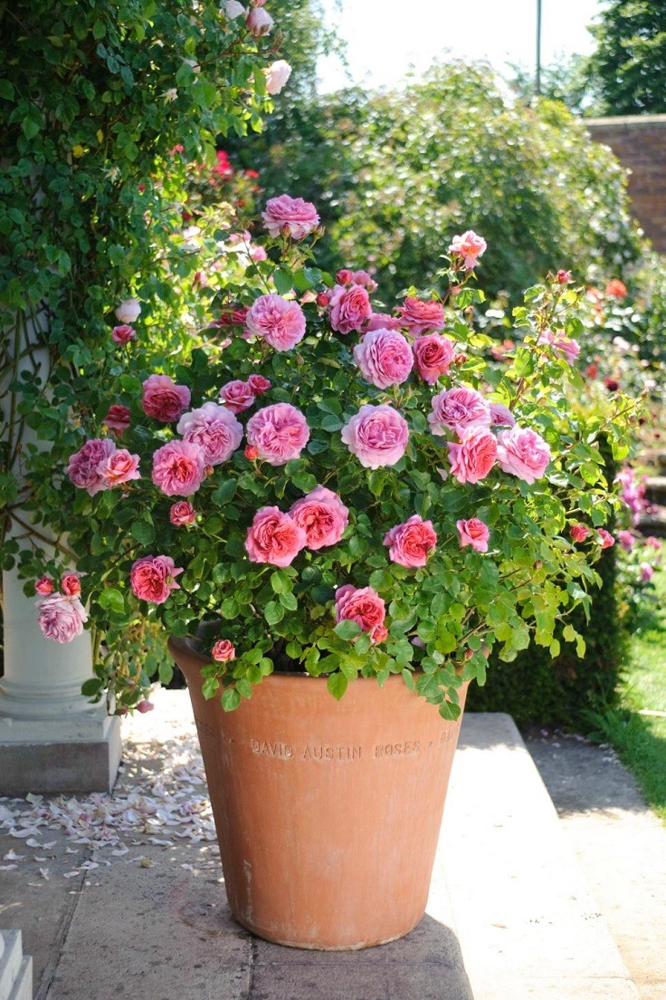 Best 10 plants for a small container garden garden pics for Small trees suitable for small gardens