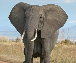 Top 10 Longest Living Animals on Earth in Order