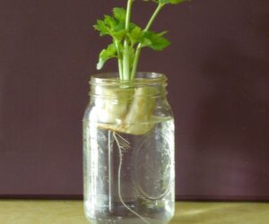 Top 10 Herbs and Veggies You Can Grow in Water