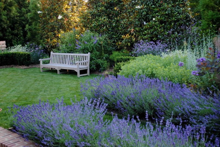 Top 10 Reasons Why To Grow Amazing Lavender In Your Garden Top