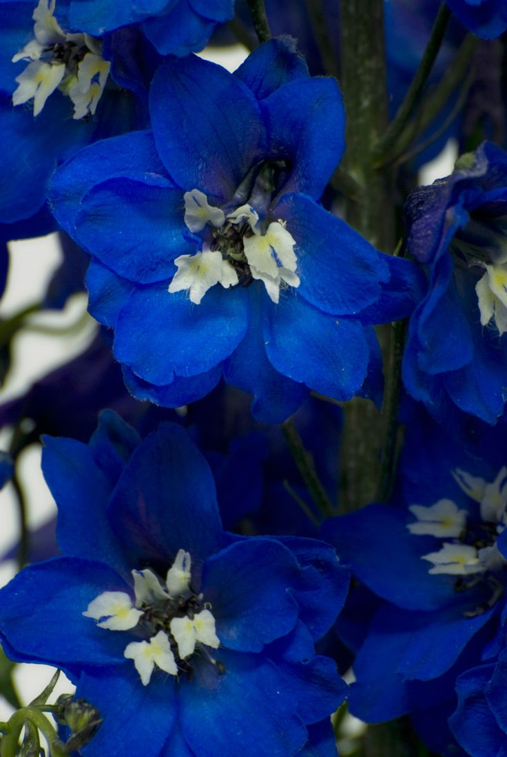 Top 10 Flowers That Will Make Your Garden a Blue Paradise
