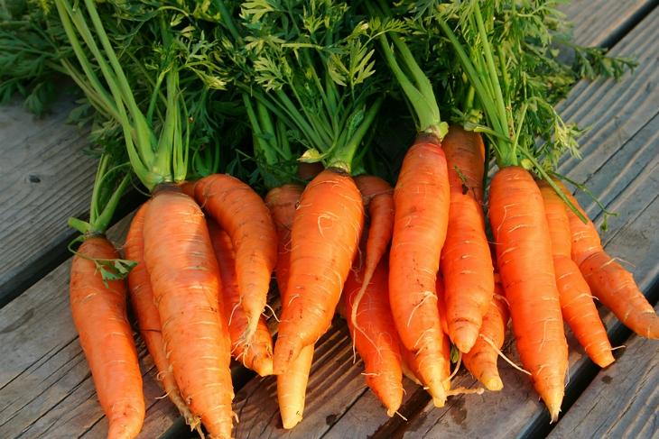 Carrots-Nantes