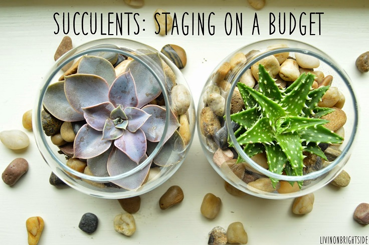 Top 10 Tips on Growing and Taking Care of Succulents