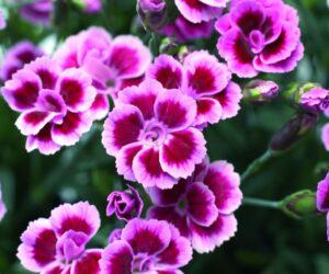 Top 10 Best Flowers for a Rainbow Garden