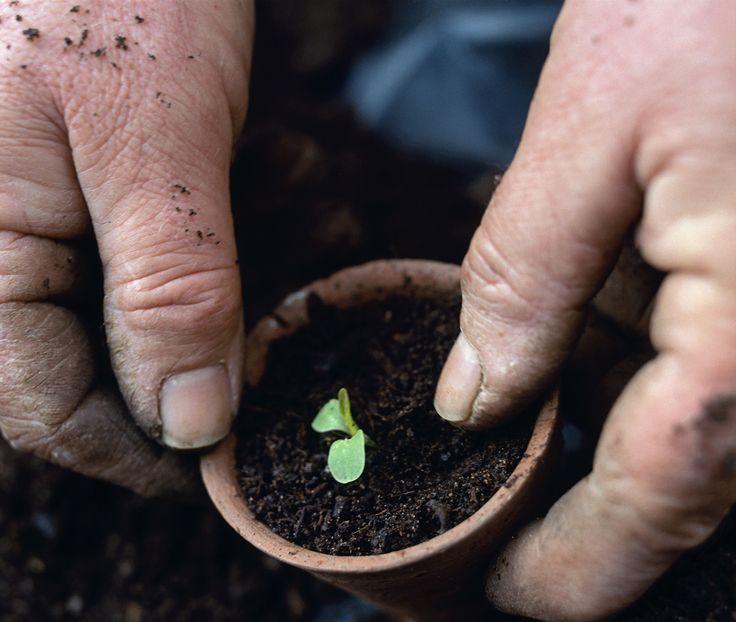 Gardening-Soil