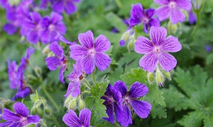 Top 10 beautiful shade loving flowers top inspired top 10 beautiful shade loving flowers mightylinksfo Gallery